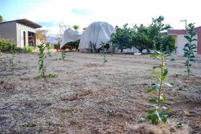 使われていない畑をレモン畑にするプロジェクト